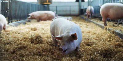 Biotraxx-Blog Beitrag: Nutztierhaltung ohne Antibiotika?